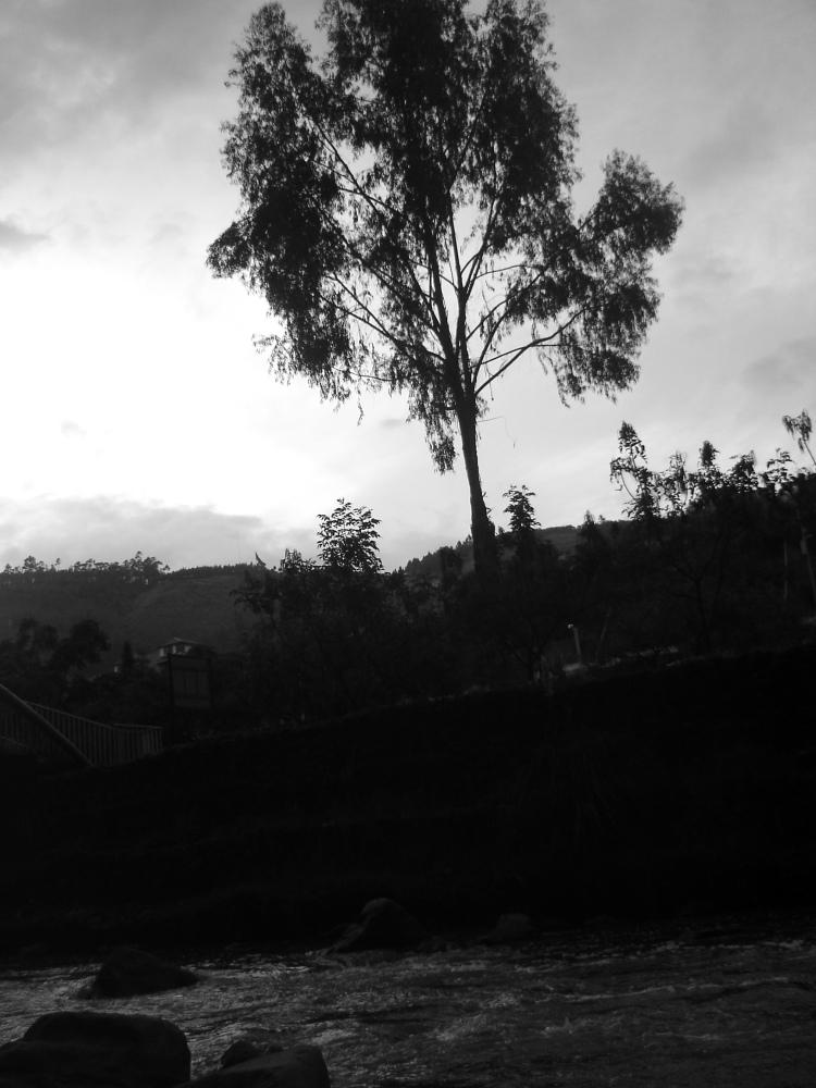 Y junto al río estaba el árbol, frío, río, frío, -todo en calma-.