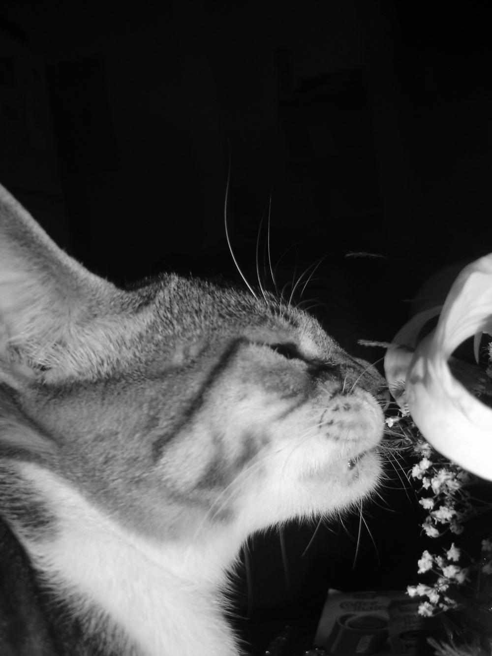 al gato inquilino le atraen las rosas