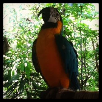 Un papagayo muestra sus colores