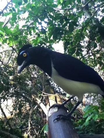 Un pájaro curioso en el área de descanso...