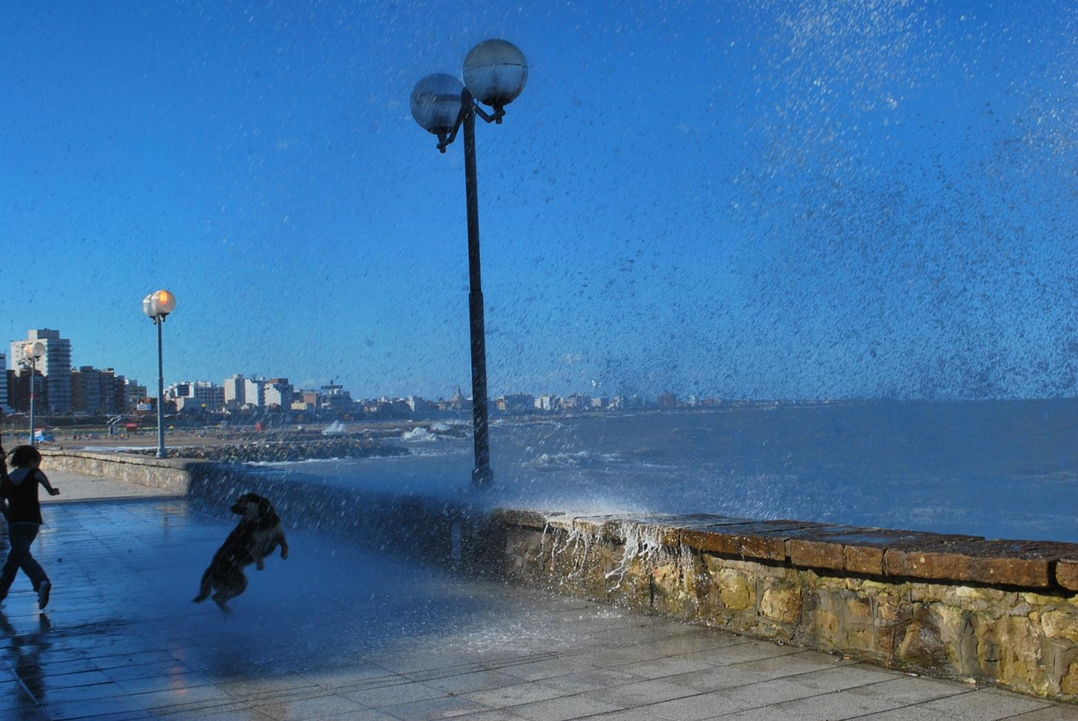 Un día caminando por la playa, un niño saltaba junto a un perro las olas que llegaban.