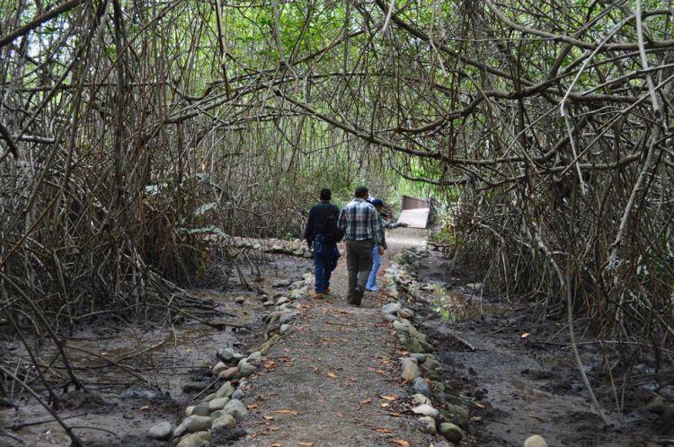 Los manglares me encantan por su singular manera de conectarse. Foto: Sofía Bermúdez.