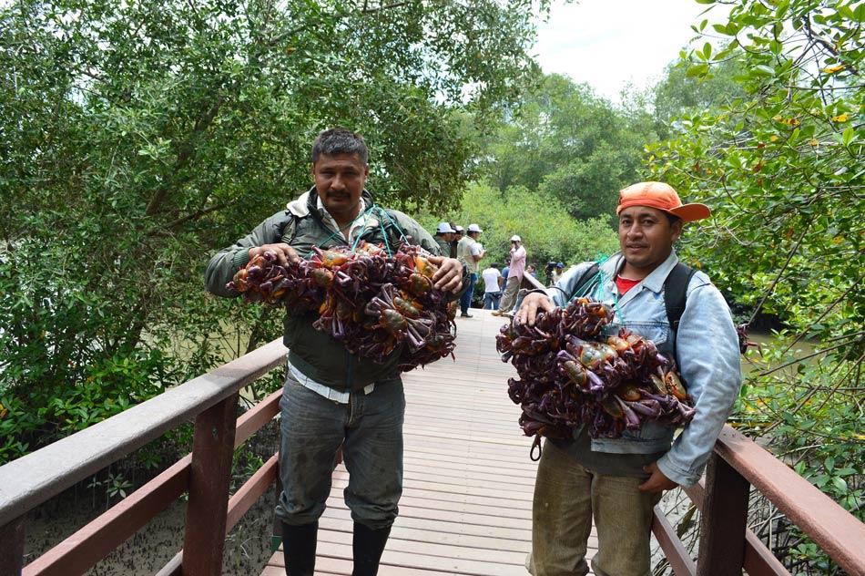 5 comunidades viven en la reserva y se dedican a la pesca artesanal de cangrejos. Foto: Sofía Bermúdez.