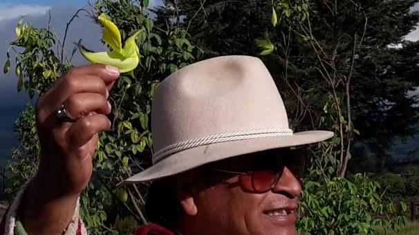 Granja de la Hostería La Estación en Machachi. Si observan bien, en esta foto hay una flor que nace del árbol del colibrí, llamada así por su semejanza con el ave